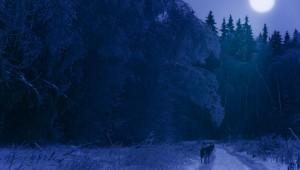 Winter wolf2